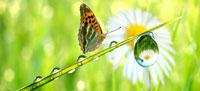 14&15 septembre 2013 : Salon Nature et Bien-être à Eygalières