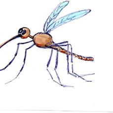 5 Remèdes naturels pour repousser les moustiques